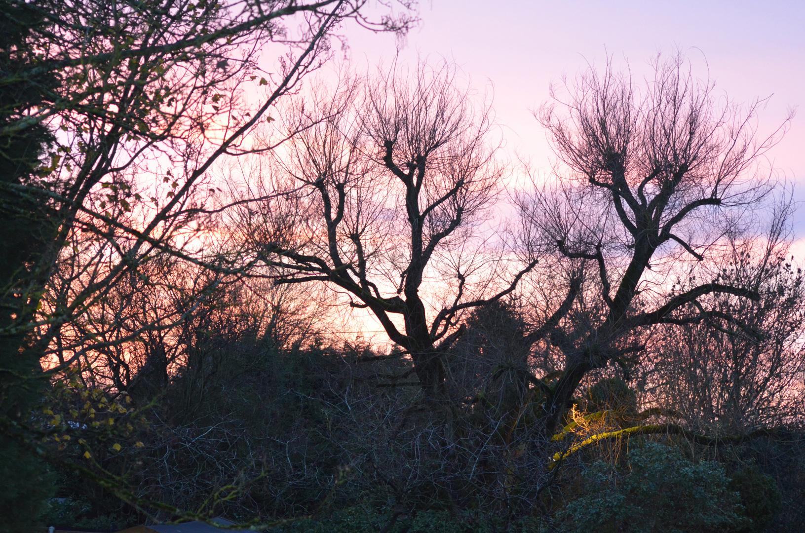 Kingsdown Meadow Sunset